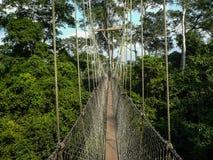 Canopy Walk Ghana Stock Photography