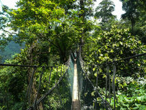 Canopy Walk Ghana Stock Images