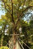 Canopy walk at gunung mulu national park Royalty Free Stock Image
