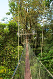 Canopy walk at gunung mulu national park Royalty Free Stock Images