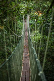 Canopy walk in Gunung Mulu National Park Royalty Free Stock Photos