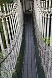 Canopy Walk Royalty Free Stock Images