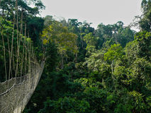 Canopy Walk. A long elevated walkway high up in the canopy of the rainforest in Taman Negara National Park, Malaysia royalty free stock photos
