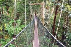 Canopy walk. Malaysia Royalty Free Stock Photo