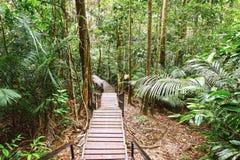 Canopy walk. Malaysia Royalty Free Stock Image