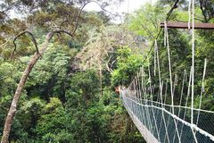 Canopy walk. Malaysia Stock Photo