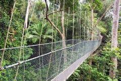 Canopy walk. Malaysia Stock Photos