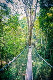 Canopy Walk Through the Rainforest Stock Photo