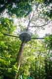Canopy Walk Through the Rainforest. At National Park Malaysia Stock Image