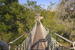 Canopy Walk in a Subtropical Forest Stock Image