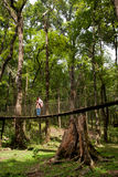 The Canopy Walk Way royalty free stock images
