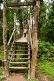 The Canopy Walk Way royalty free stock photo