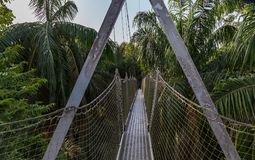 Canopy walkway as seen at the Lekki Conservation Center in Lekki, Lagos Nigeria. Canopy Walkway as seen in Mangrove forest in Lekki Conservation Center LCC in stock photos