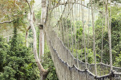 Canopy walkway in Kakum National Park, Ghana Stock Images