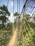Canopy walkway in Kakum National Park, Ghana, West Africa Royalty Free Stock Image