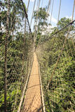 Canopy walkway in Kakum National Park, Ghana, West Africa Royalty Free Stock Photos