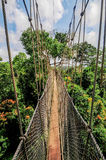 Canopy Walkway of Kakum National Park Stock Photos