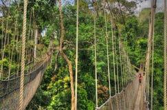 Canopy Walkway of Kakum National Park Stock Photos