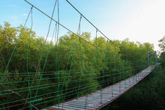 Canopy Walkway through Mangrove forrest Royalty Free Stock Photo