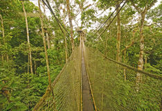 Canopy Walkway in the Rain Forest Royalty Free Stock Images