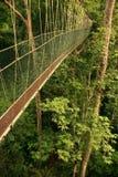 Canopy walkway, Taman Negara, Malaysia Stock Photos