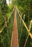 Canopy walkway, Taman Negara, Malaysia Stock Images