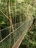 Canopy walkway, Taman Negara, Malaysia Royalty Free Stock Images
