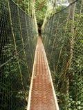 Canopy walkway, Taman Negara, Malaysia Stock Photo