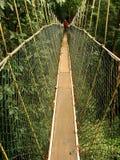 Canopy walkway, Taman Negara, Malaysia Royalty Free Stock Photos
