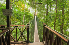 Canopy walkway Stock Photography