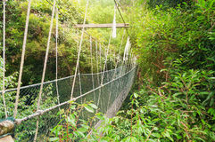 Canopy walkway Stock Photos