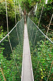 Canopy walkway Royalty Free Stock Photo