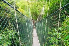 Canopy walkway Stock Image