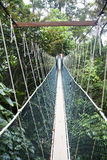 Canopy walkway. Taman Negara National Park Royalty Free Stock Image
