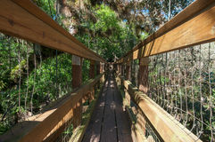 Canopy Walkway Stock Images