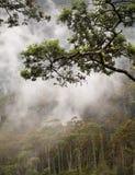 canopydjungel fotografering för bildbyråer