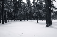 canopyen räknade snow Arkivbilder