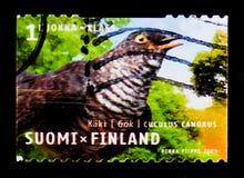 Canorus comune del Cuculus del cuculo, serie regionale degli uccelli, circa 2003 Immagini Stock