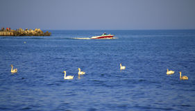 Canot automobile et cygnes sur la mer photos libres de droits