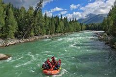 Canottaggio dei turisti nel lago Kanas Fotografia Stock Libera da Diritti