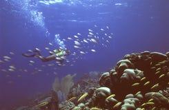 canouan риф Стоковые Изображения