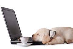 Cansado no trabalho Imagem de Stock