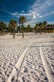 Canse las pistas en la arena y las palmeras en la playa en Clearwate foto de archivo libre de regalías