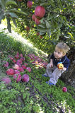 Young boy under apple tree Royalty Free Stock Images