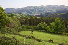 Cantabria valley Stock Images