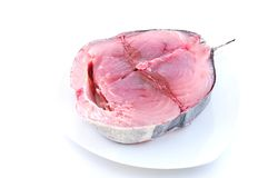 Cantabrian white tuna. Stock Photography
