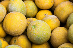 Cantalope melons on display at market Royalty Free Stock Photo