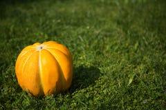 Cantaloup cru entier Photo libre de droits