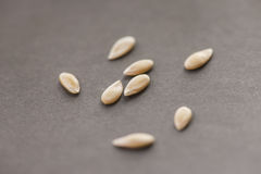 Cantaloup seeds on gray background Royalty Free Stock Photography