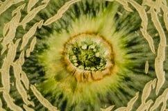 Cantaloup zakończenia Melonowa tekstura Zdjęcia Stock